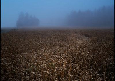 Frozen Morning – Dalarna Sweden